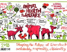 HIGH LEVEL PANEL OF THE WORLD ORGANISATION FOR ANIMAL HEALTH (OIE)